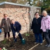 Peace Rose Planted at Ayscoughfee to Commemorate WW1 Centenary
